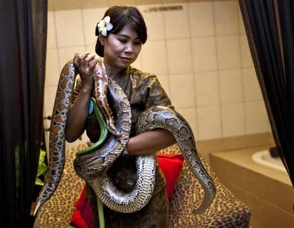 Piton yılanlarıyla masaj galerisi resim 1