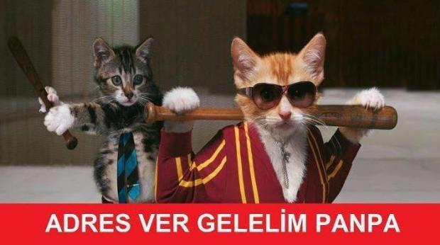 Sosyal medyada kedidir kedi sarsıntısı galerisi resim 1