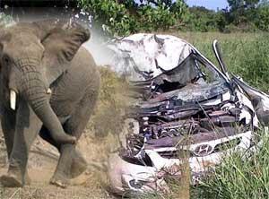 Safaride fil çarpmışa döndüler!