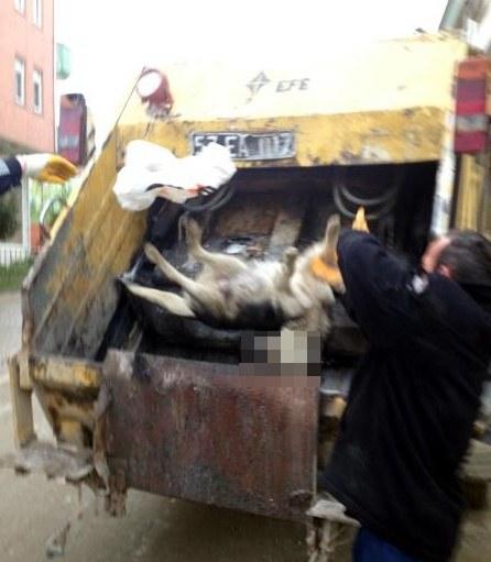 Sinopta köpek katliamı