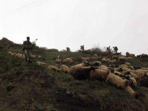 Koyunlara hava destekli operasyon
