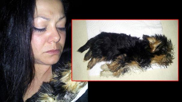 Yavru köpek uçağın kargo bölümünde donarak öldü