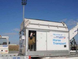 Milyon dolarlık atlar geliyor