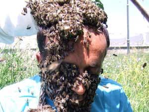 Arılardan saç ve sakal yaptı